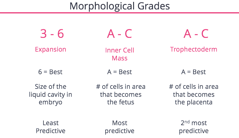Morphological Grades