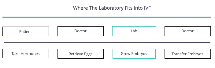How IVF Lab Fits In