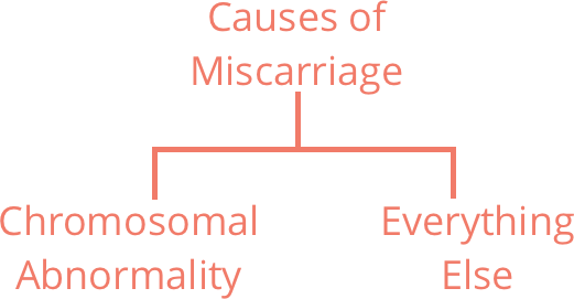 Source of Miscarriage Image