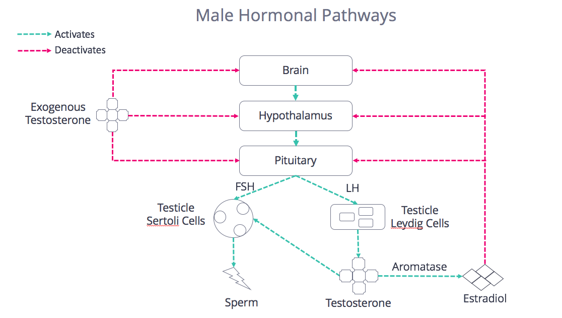 Male Hormonal Pathways
