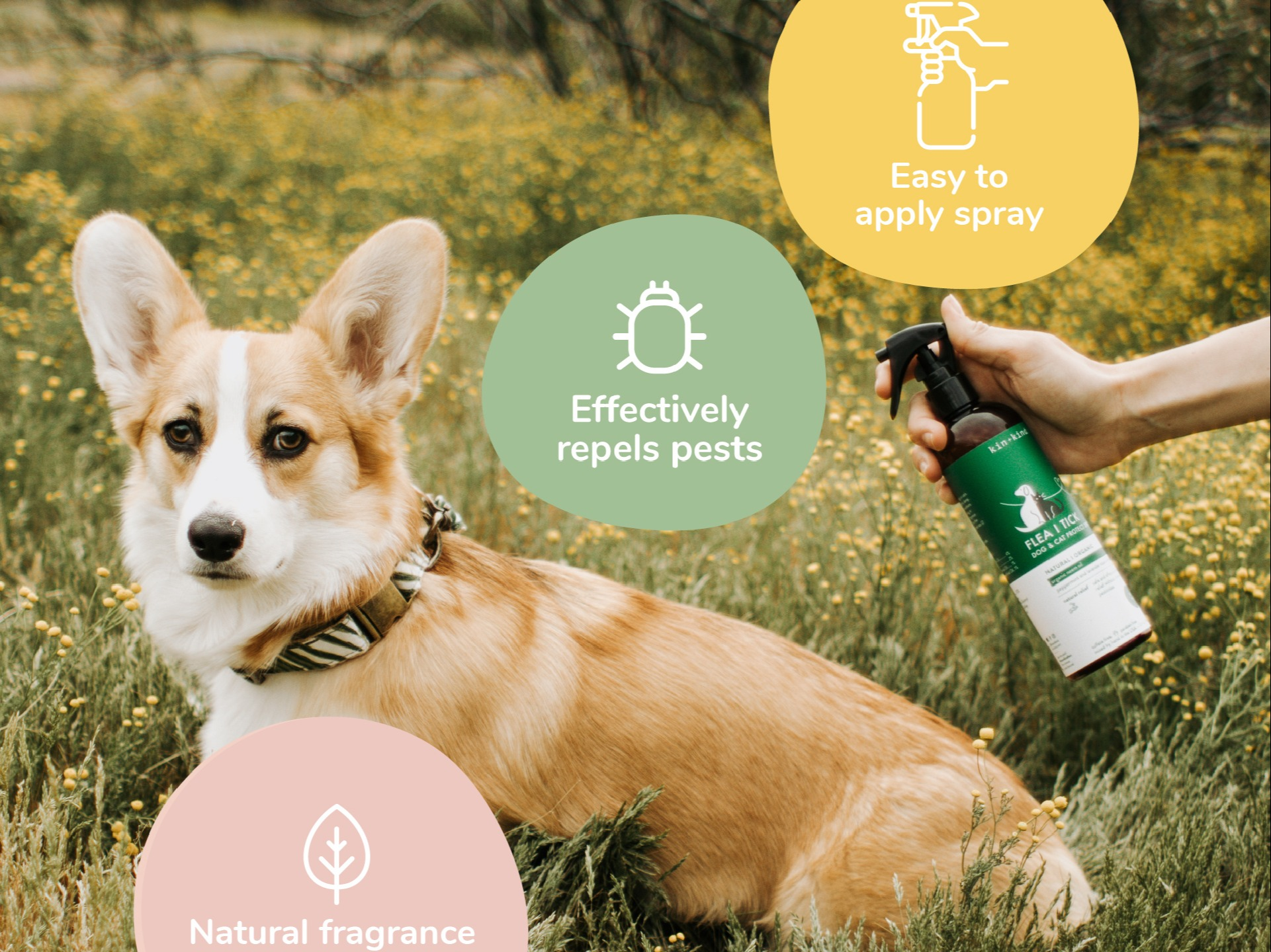 Image of corgi in grass getting sprayed with flea & tick spray