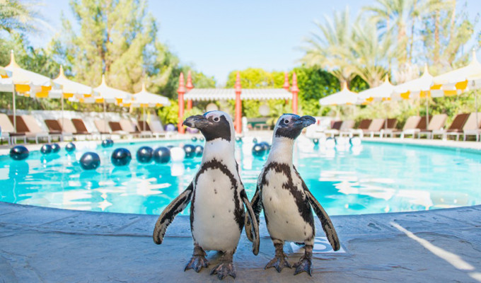 Photograph of two penguins.