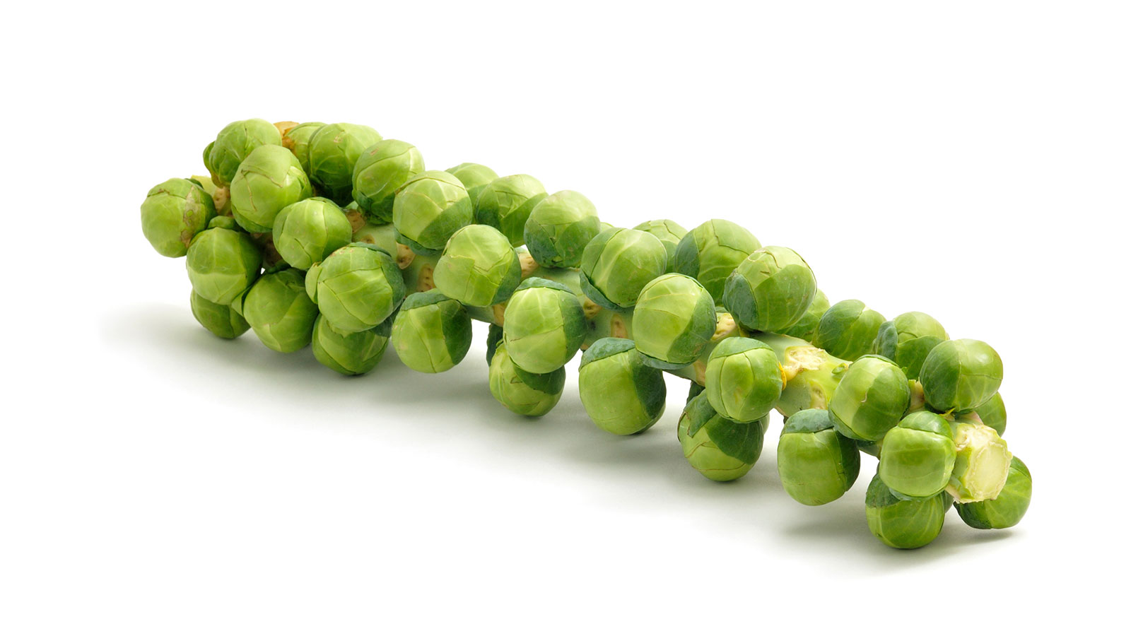 Brussel-Sprout-Stalk