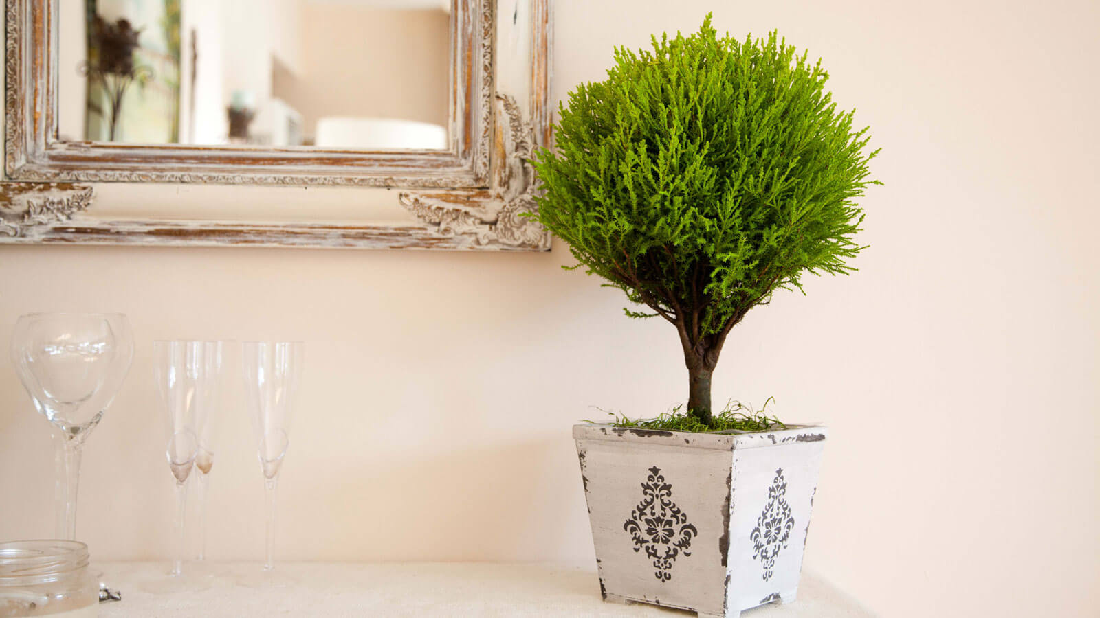 Lemon Cypress Topiaries