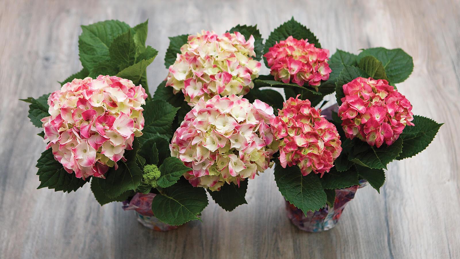 Spring For Flowers The Fresh Market