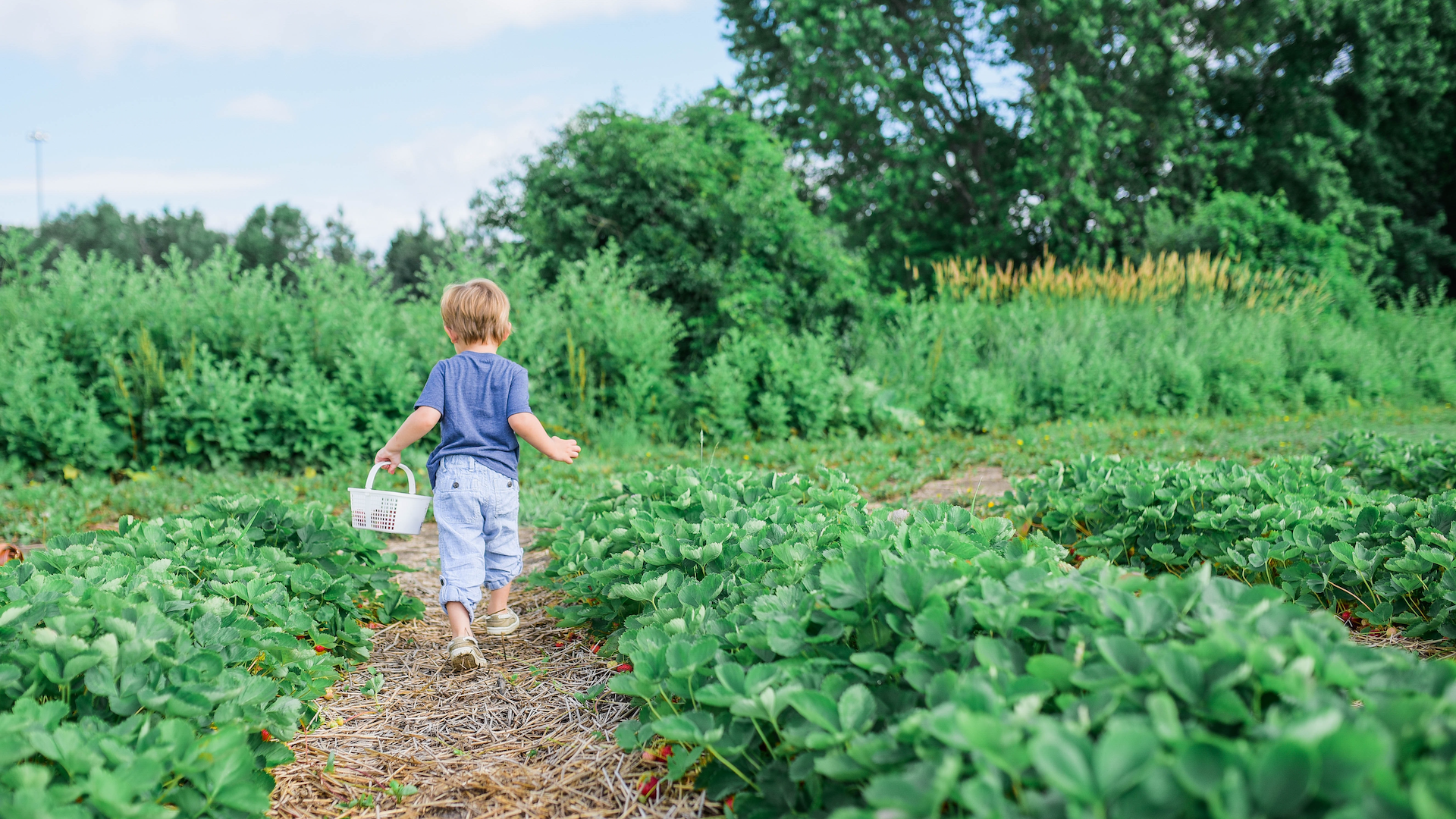 Three Activities for Preschool Families: The Farmer and the Seed Hero Image