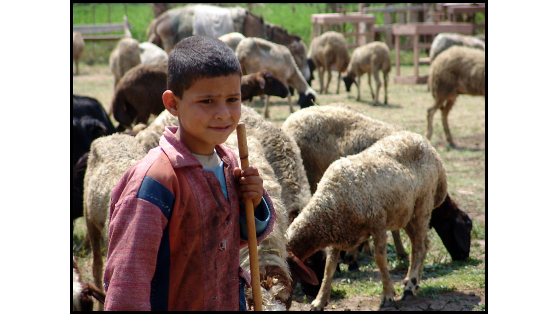 The Life of a Shepherd Boy Teaches Kids What it Means to Fear the Lord Hero Image