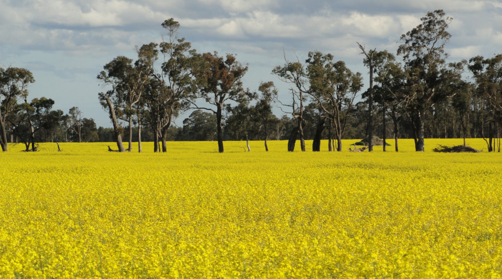 Converting from Bluegum to row crops field