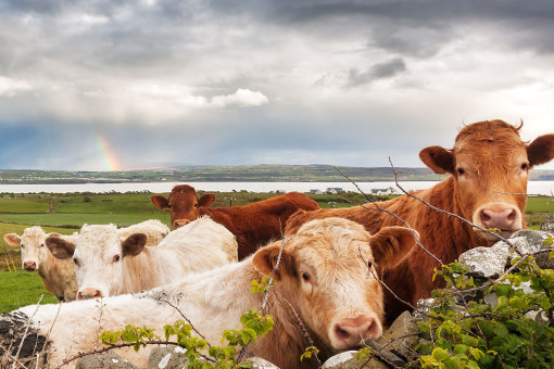 Cover options for farming insurance in Ireland