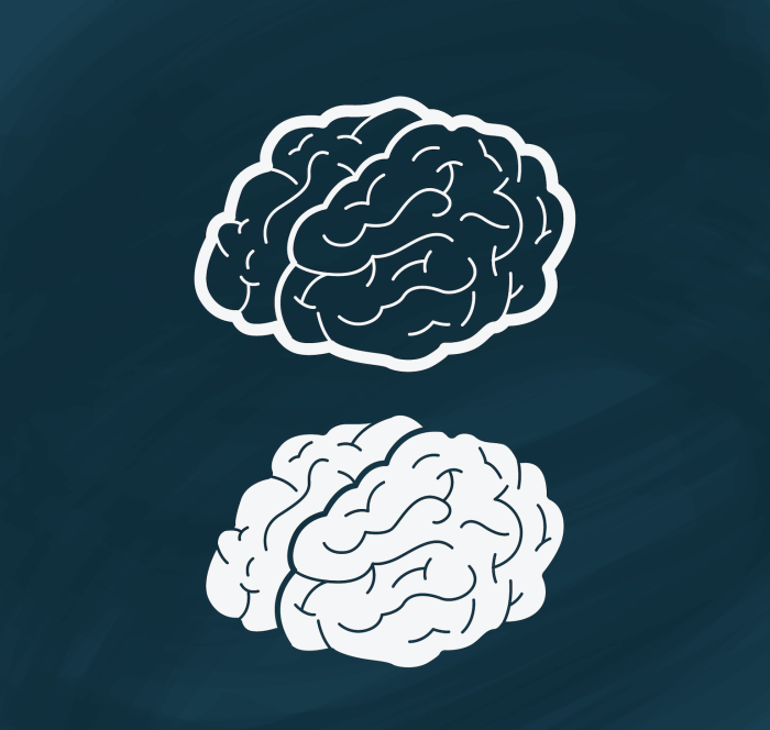 Two drawings of the brain