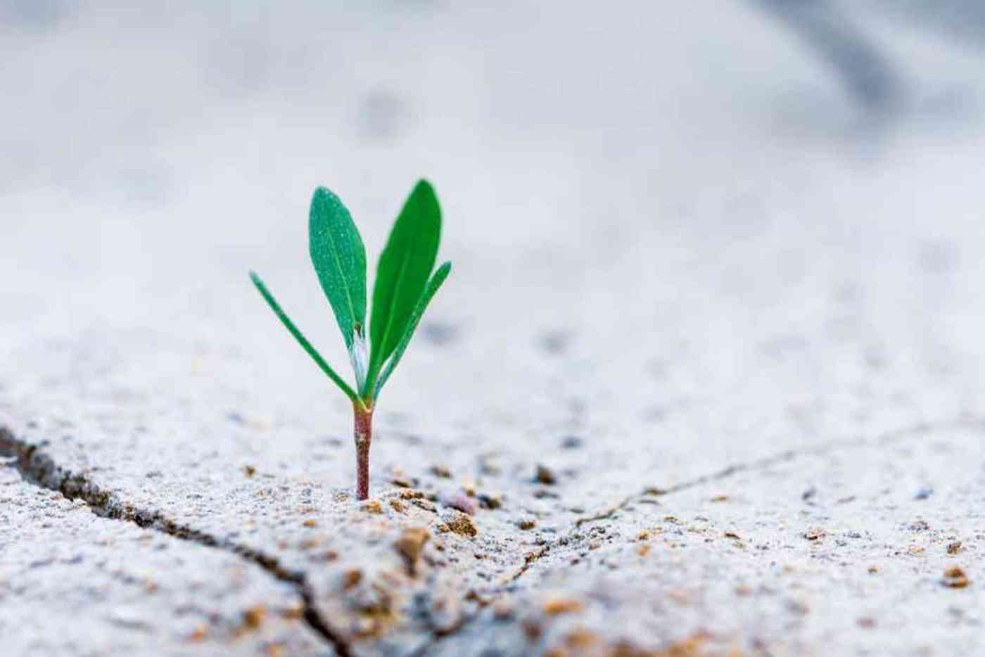small plant growing in concrete