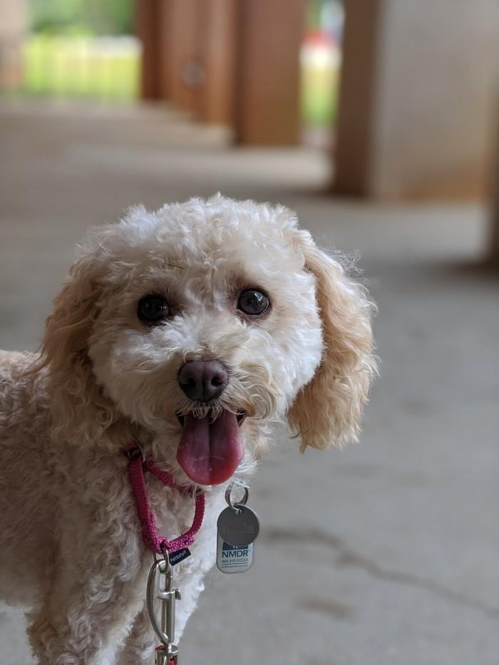 Danielle's dog smiling