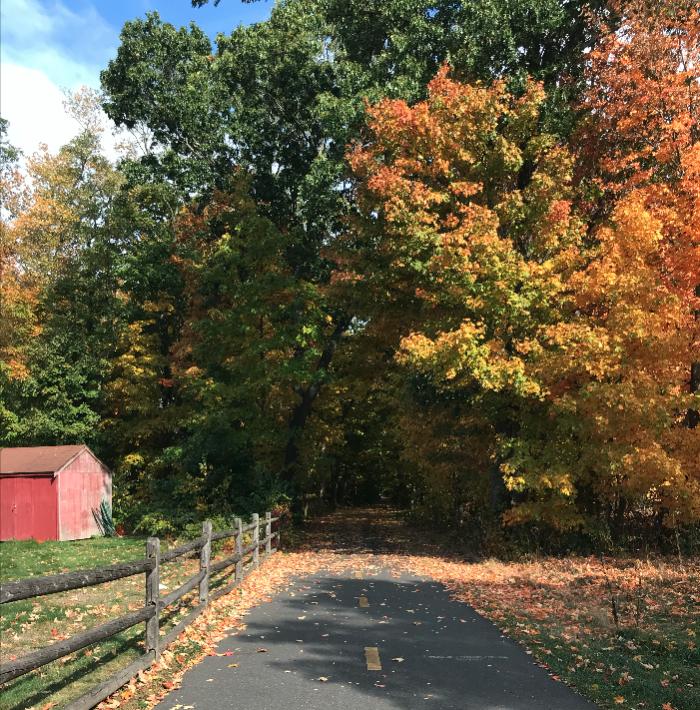 Una foto del camino por el que caminaba.