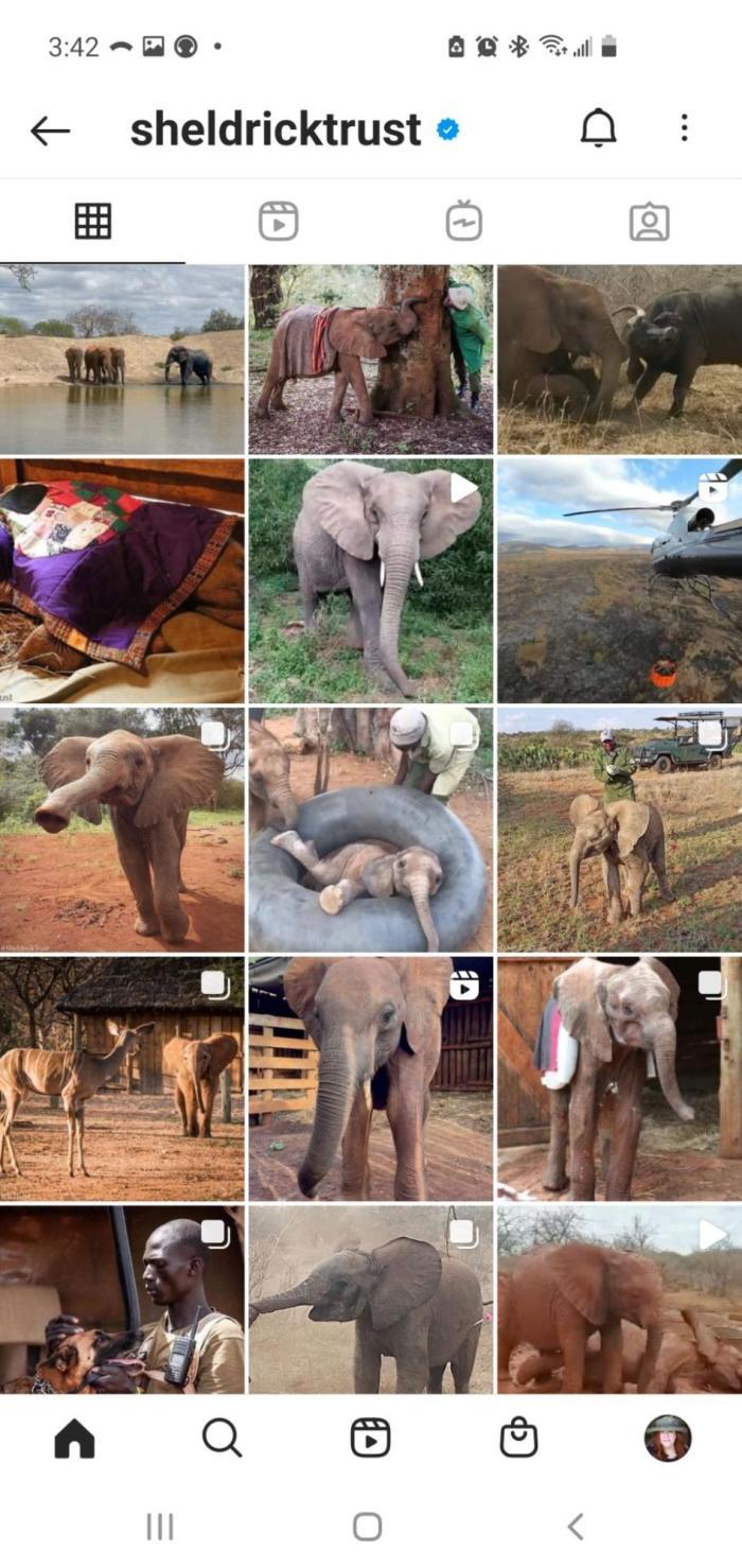 The Sheldrick Trust Instagram feed (elephants!)