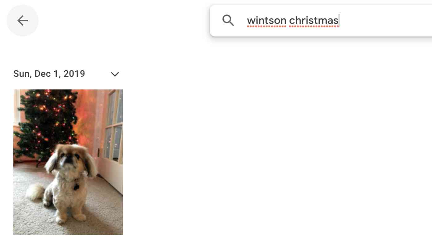 Picture of Winston by a Christmas tree with the search wintson christmas