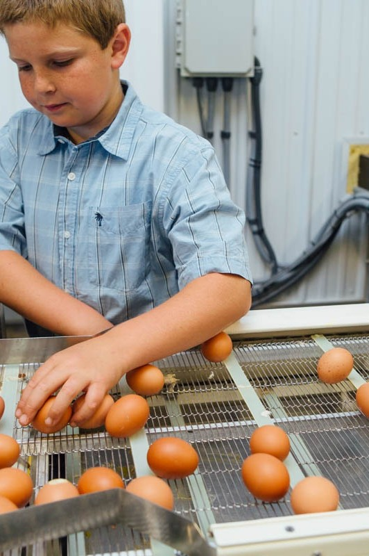 Journey of the Egg – From Farm to Table