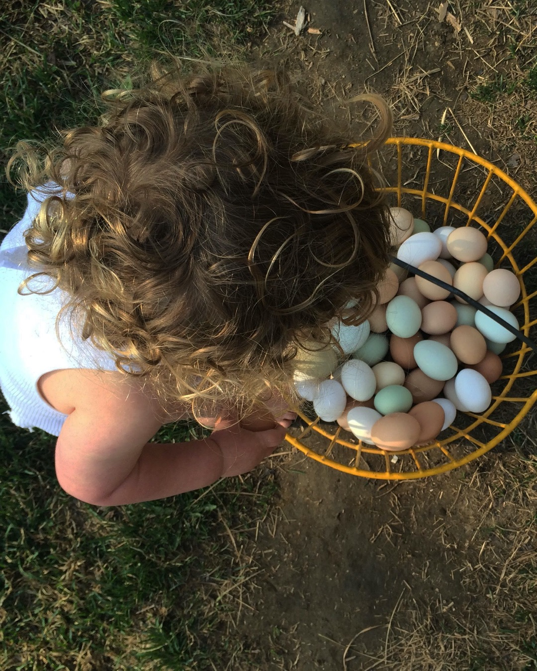 backyard-hens-kids-ig-1