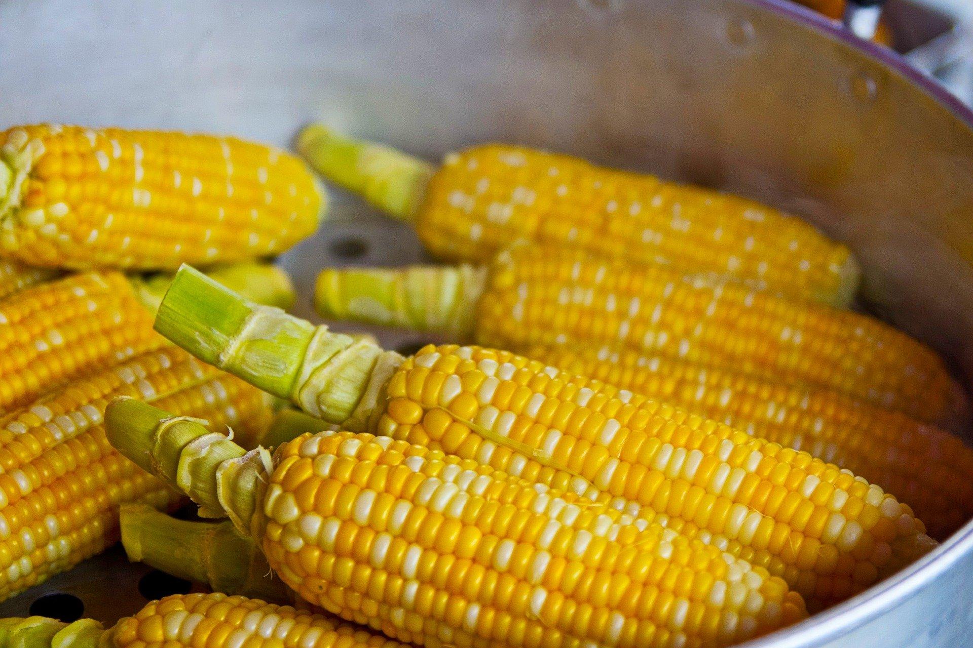 Pieczona kukurydza z masłem chili – przekąska pełna aromatycznych ziół