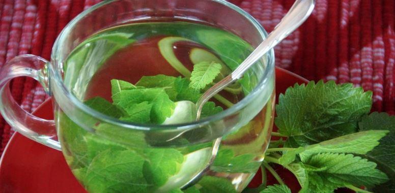 Herbata z melisy na zdrowie