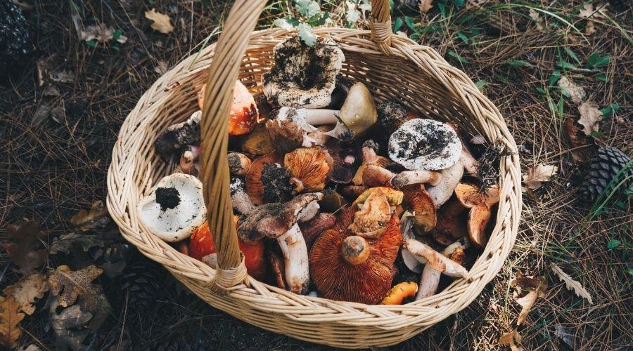 Grzyby w polskich lasach