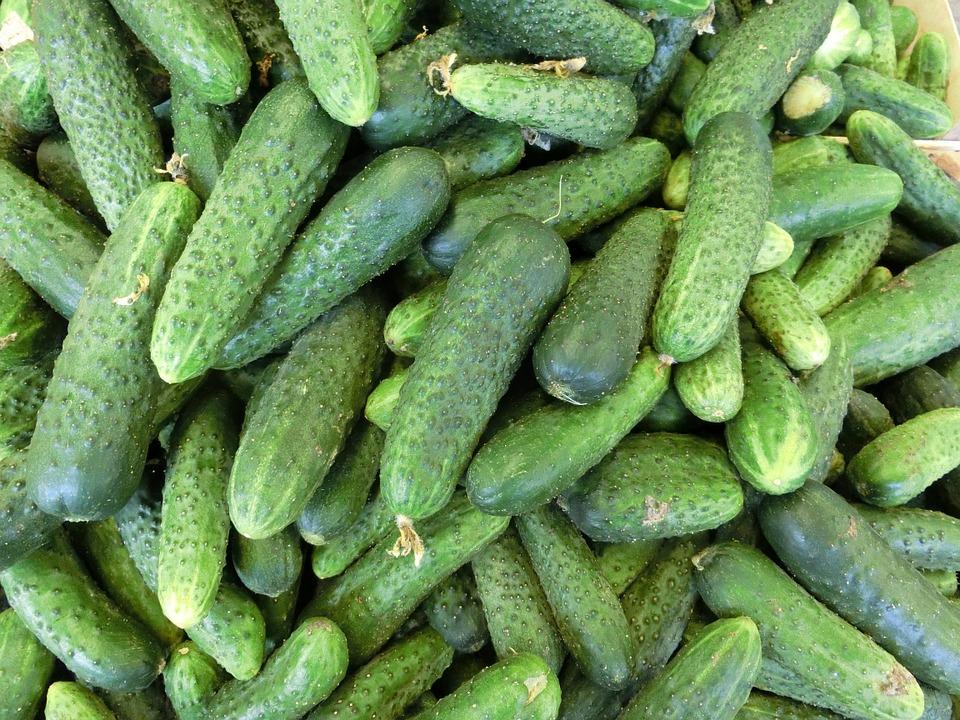 cucumbers-379886 960 720