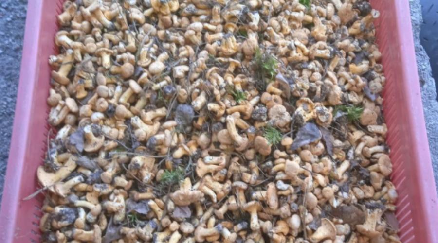 Kosz pełen grzybów