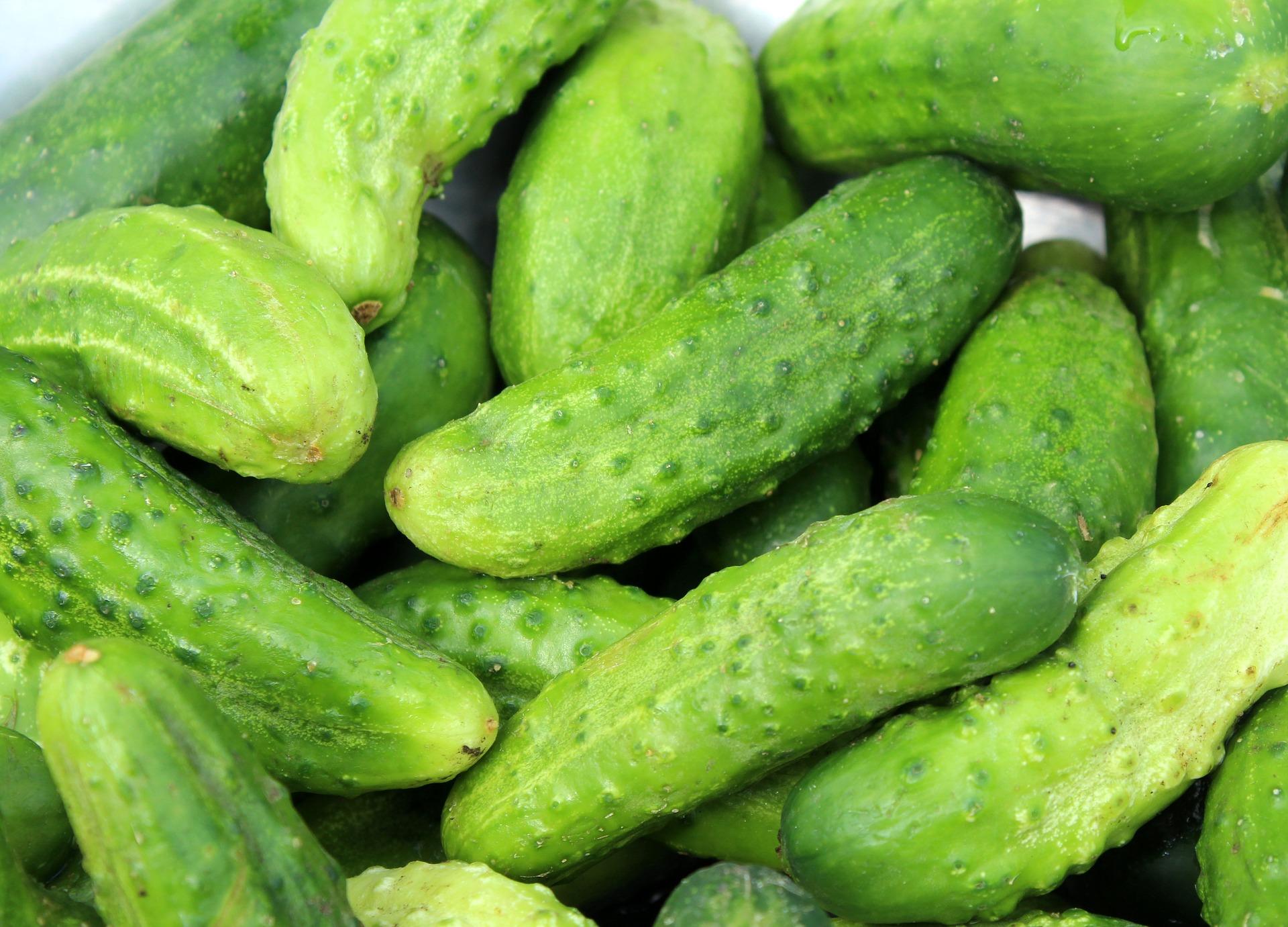 cucumbers-3534185 1920
