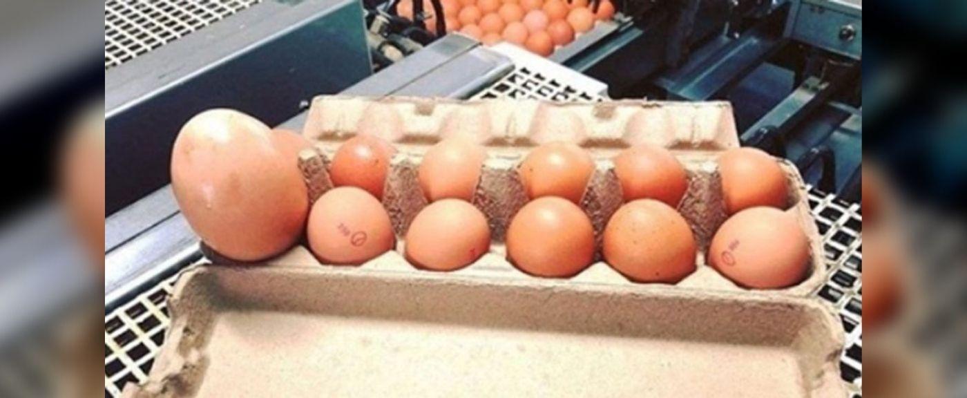 Jajko zaskoczyło rolnika