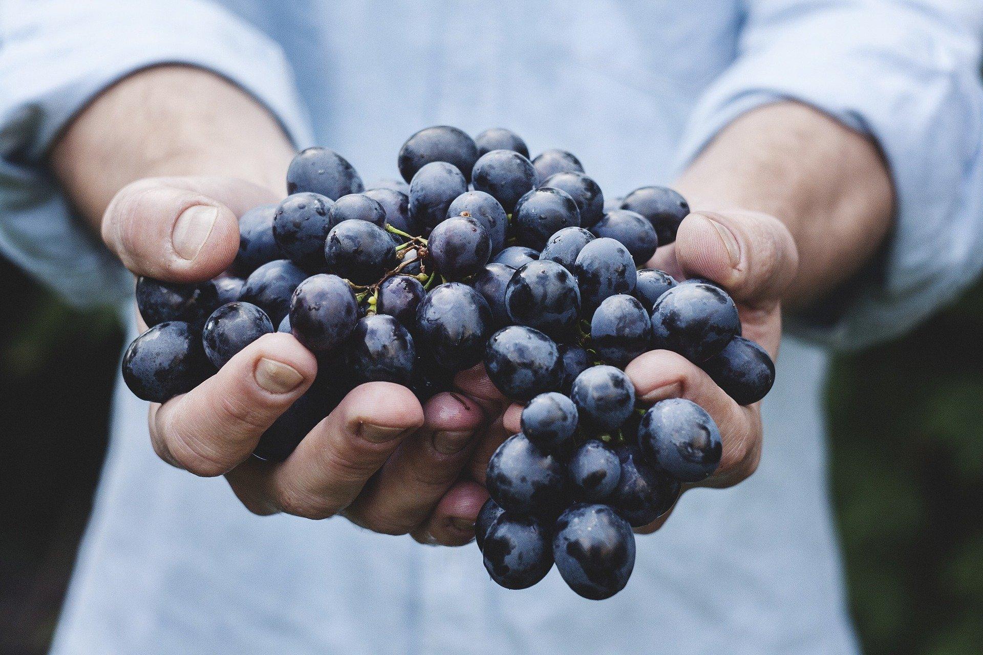 grapes-690230 1920