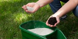 When to Fertilise Your Lawn