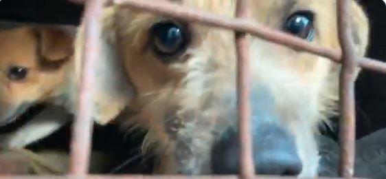 Psy były przetrzymywane w koszmarnych warunkach. Zostały odebrane właścicielom.