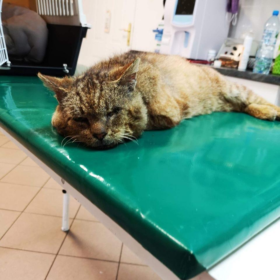 """Kot o imieniu Leon pilnie szuka kochającego domu. O pomoc apeluje """"KOTOZ Suwałki Mruczki do adopcji"""" we wpisie na Facebooku."""