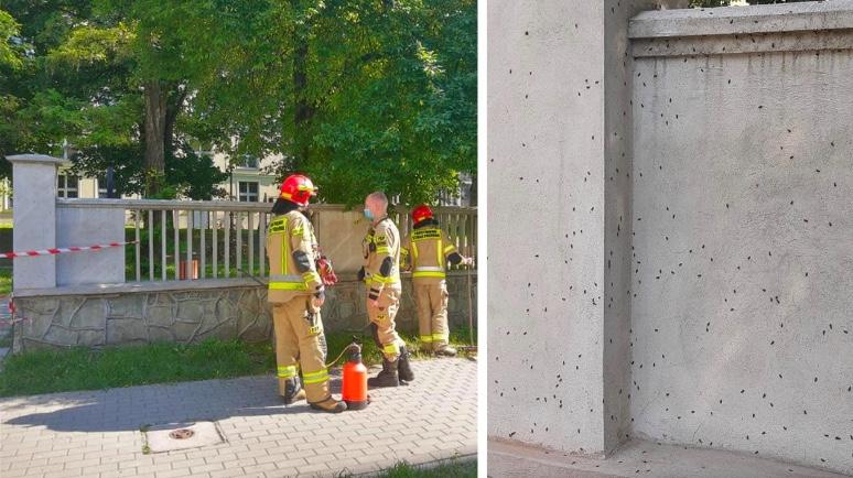 W Katowicach w związku z larwami biedronki azjatyckiej konieczne było zamknięcie placu zabaw