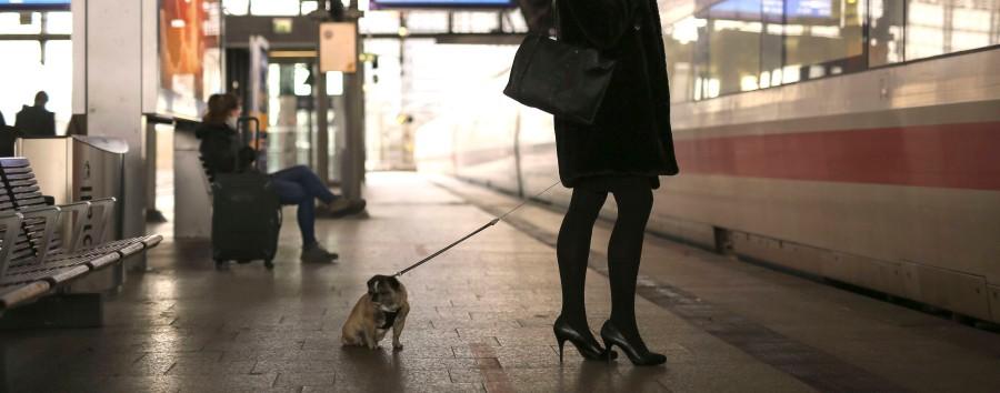 Wie man Bahntickets für Hunde löst