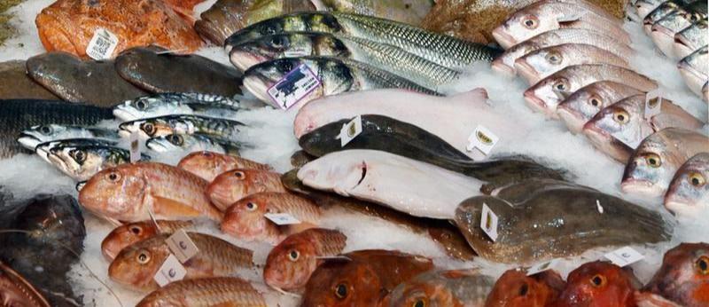 Wilmersdorf bringt das Fischtaxi an den Start