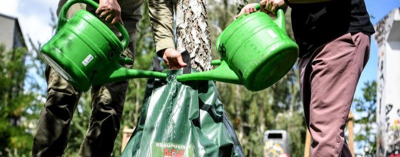 Spandau verbietet Aufstellen von Bewässerungssäcken an Bäumen