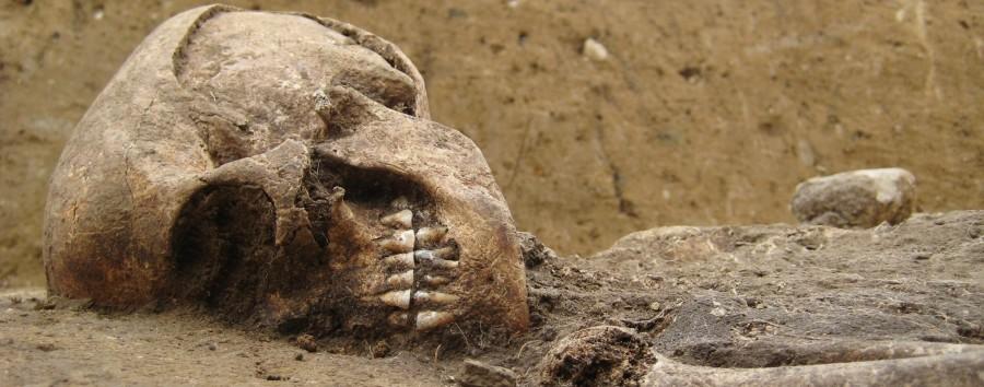 Alter des seltenen Ausgrabungsfunds in Brandenburg bestimmt