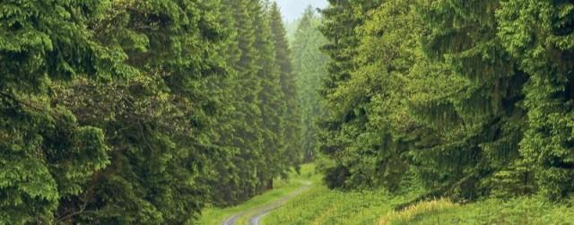 Radio Eins pflanzt zehntausende Bäume – dank Twitter