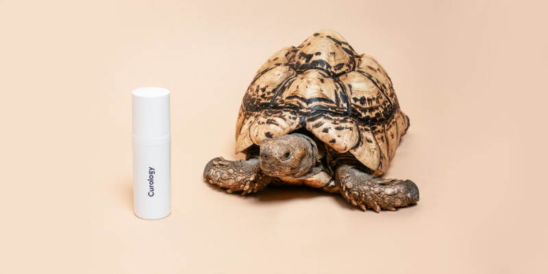 Turtle with custom curology bottle against neutral background