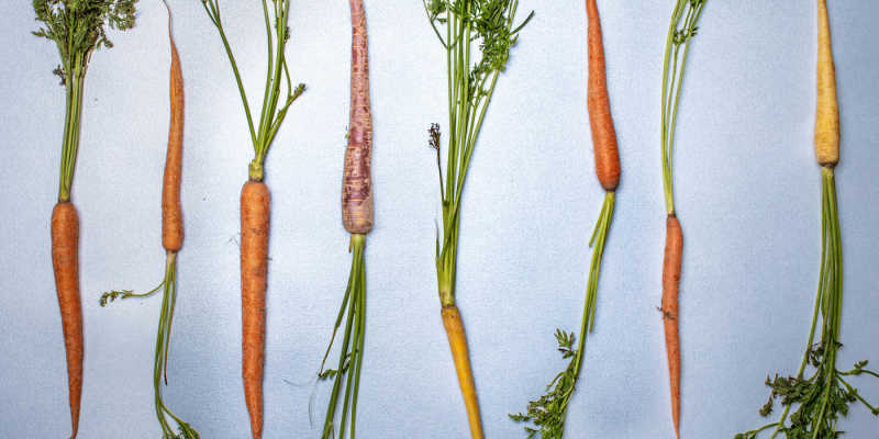 Carrots of various colors against a neutral background