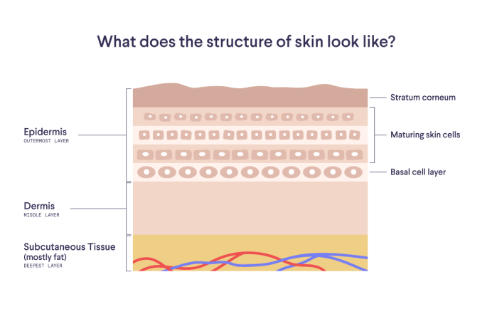 Illustration of skin layers with text: