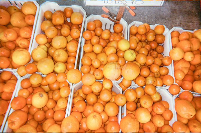 Oranges in cartons for sale