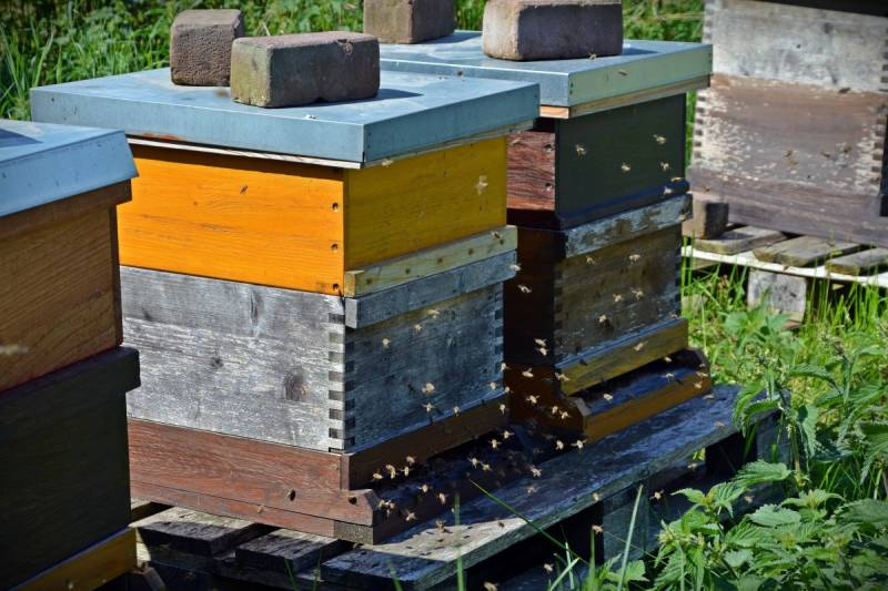 Nucleus and full box hives