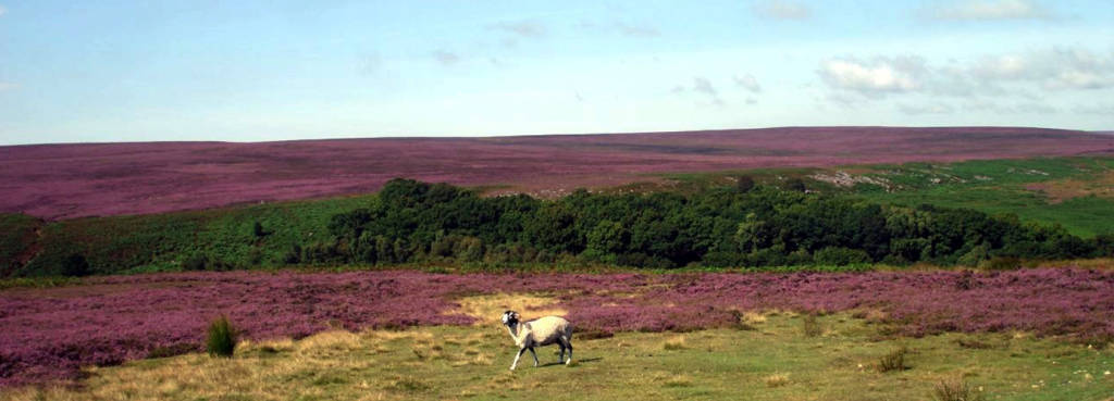 north-york-moors-national-park-1386x500