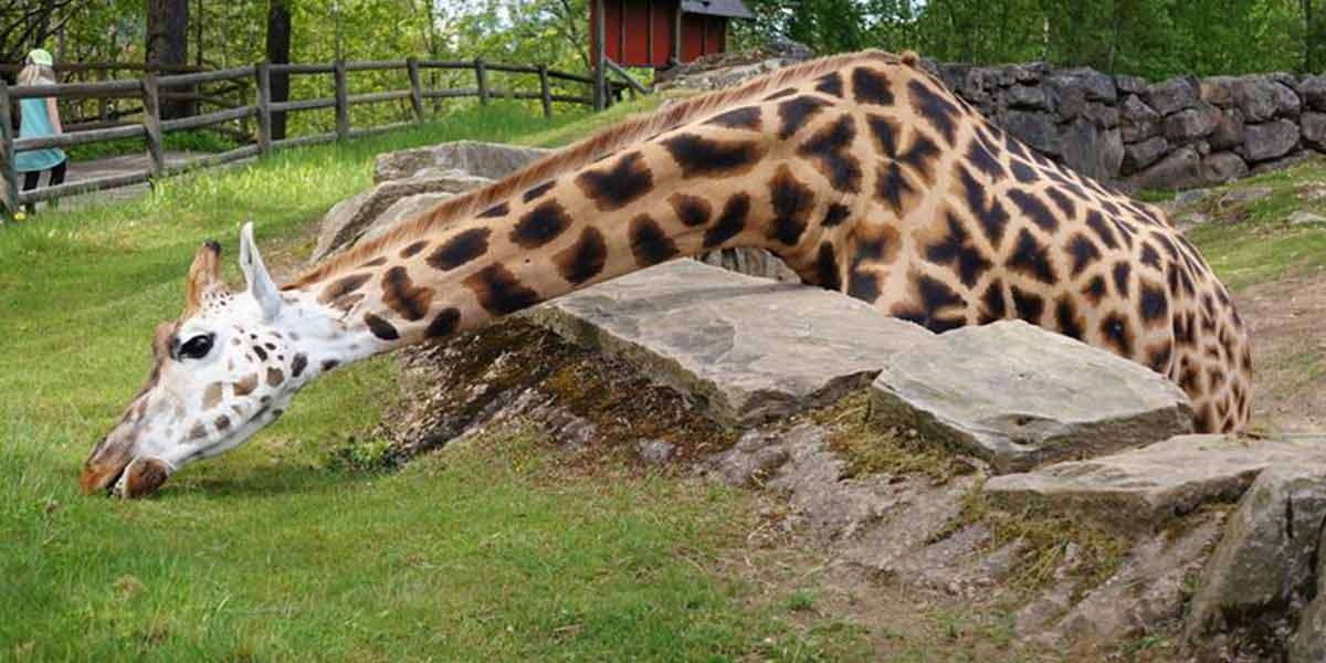 Gothenburg - Zoo