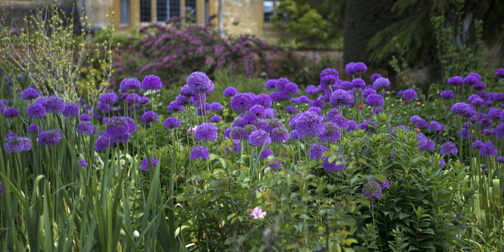 UNI 1200x600 hidcote manor flowers
