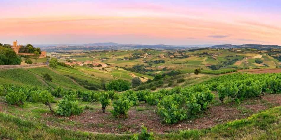 Wine regions in France - Beaujolais