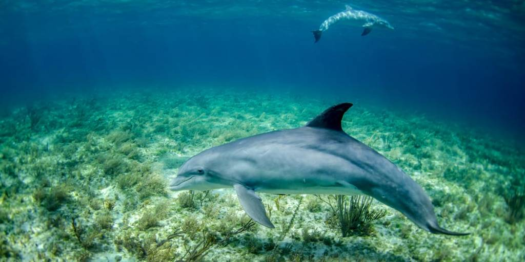 Carbon offsetting - dolphins