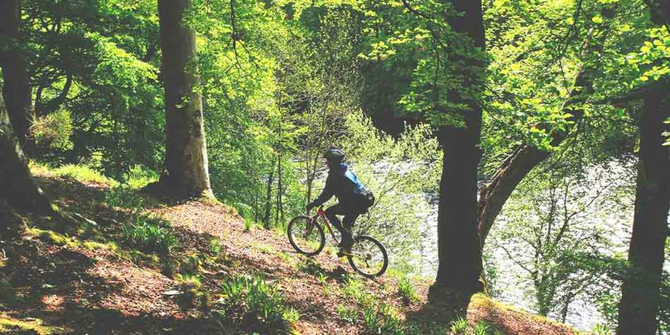 Boy cycling in woods in Scotland