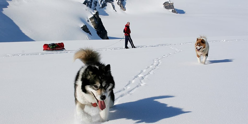 Two husky dogs running through the snow in Norway with a man in the background pulling a sled